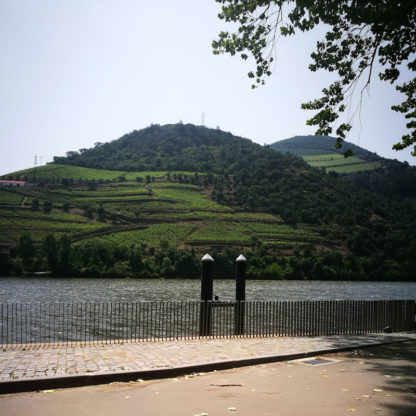 Small Cruise in Douro Valley