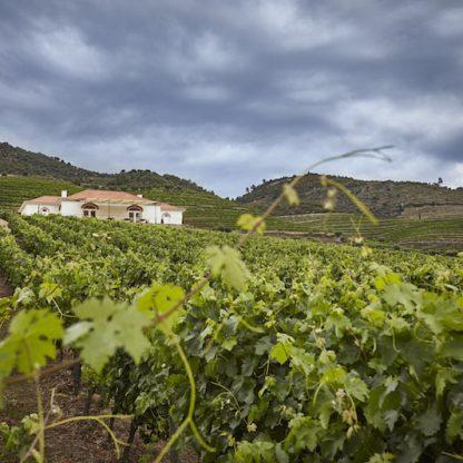 Program in Douro Valley