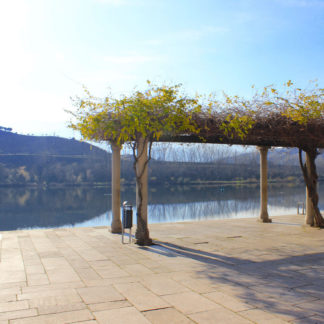 Cruise in Douro river and visit a Wine Farm