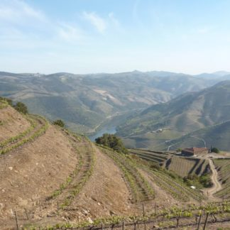 Walk-in-Douro-valley